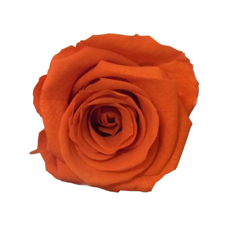col-burnt-orange