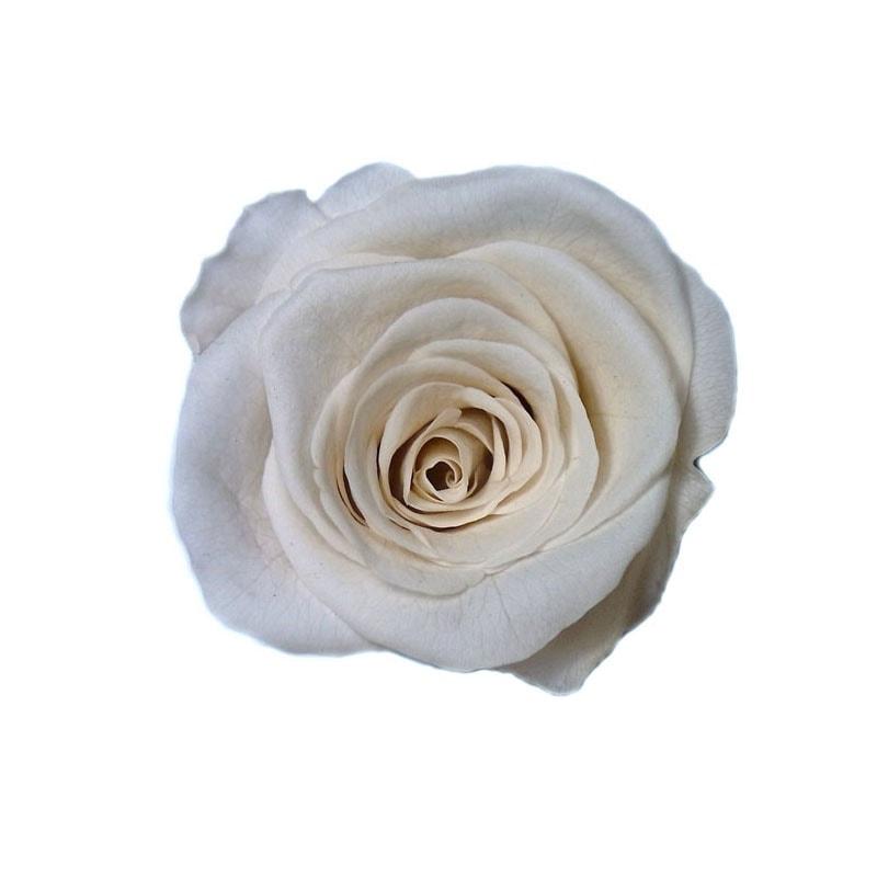 col-white