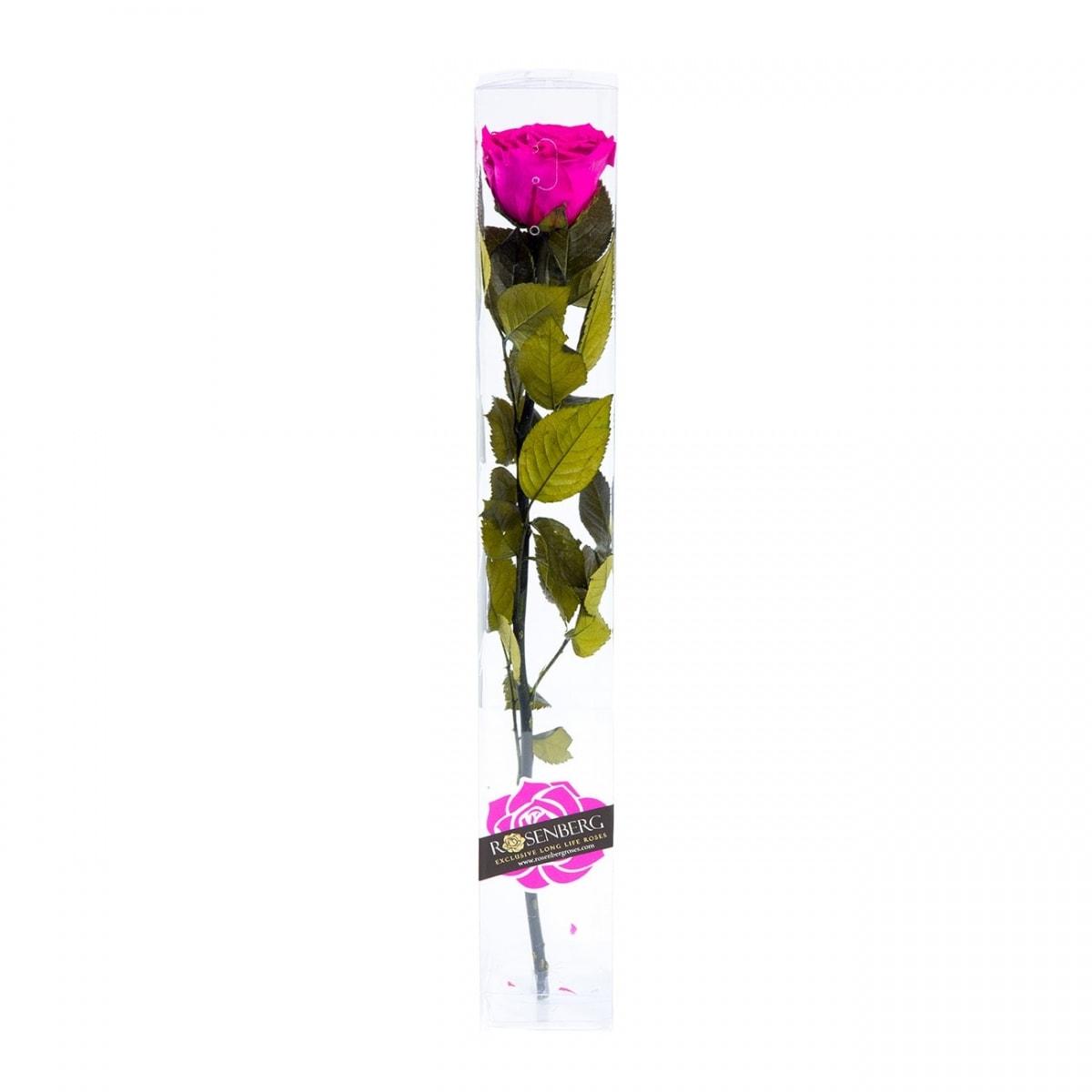 roos karbis