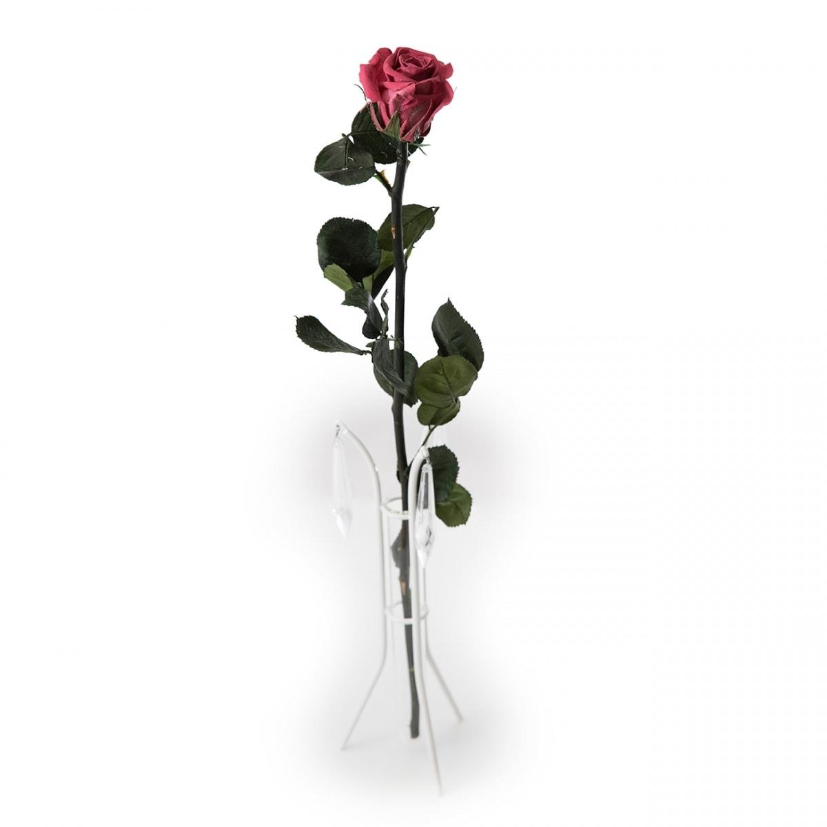 roos-kingsize-kirsipunane
