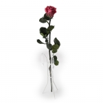 roos-kingsize-lilla