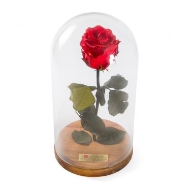 roos klaaskuplis