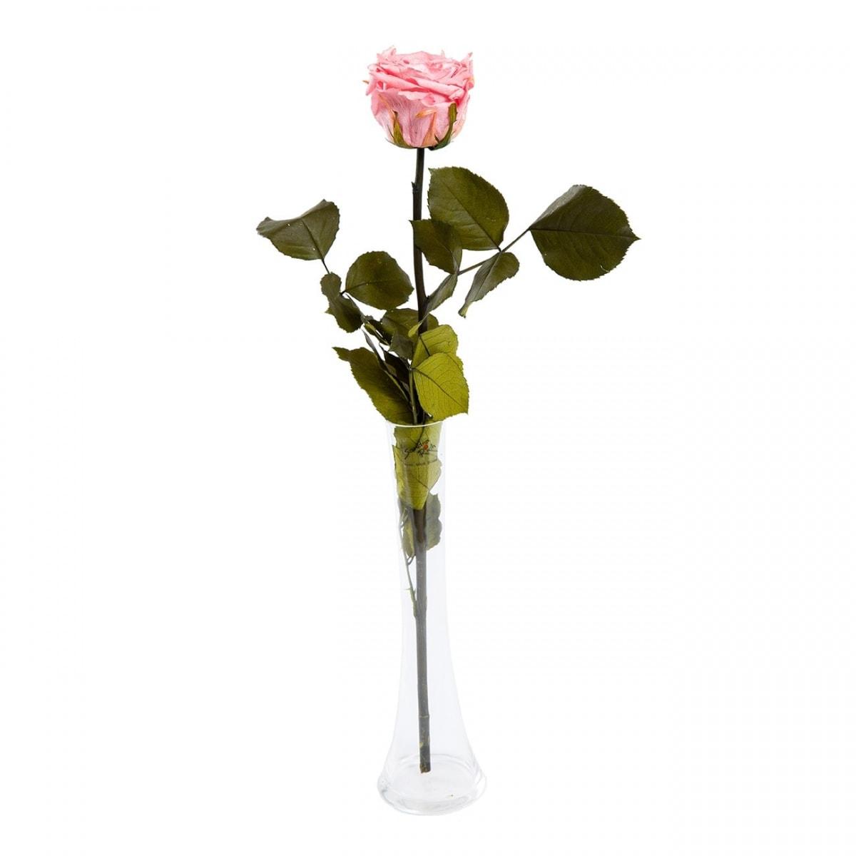 Roosa roos vaasis