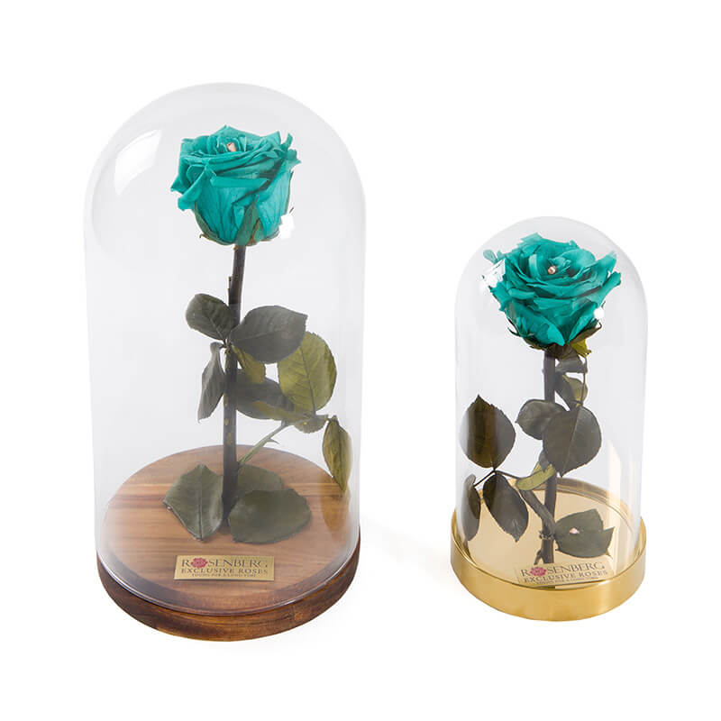 Sinine roos kuplis - Rosenberg Roses