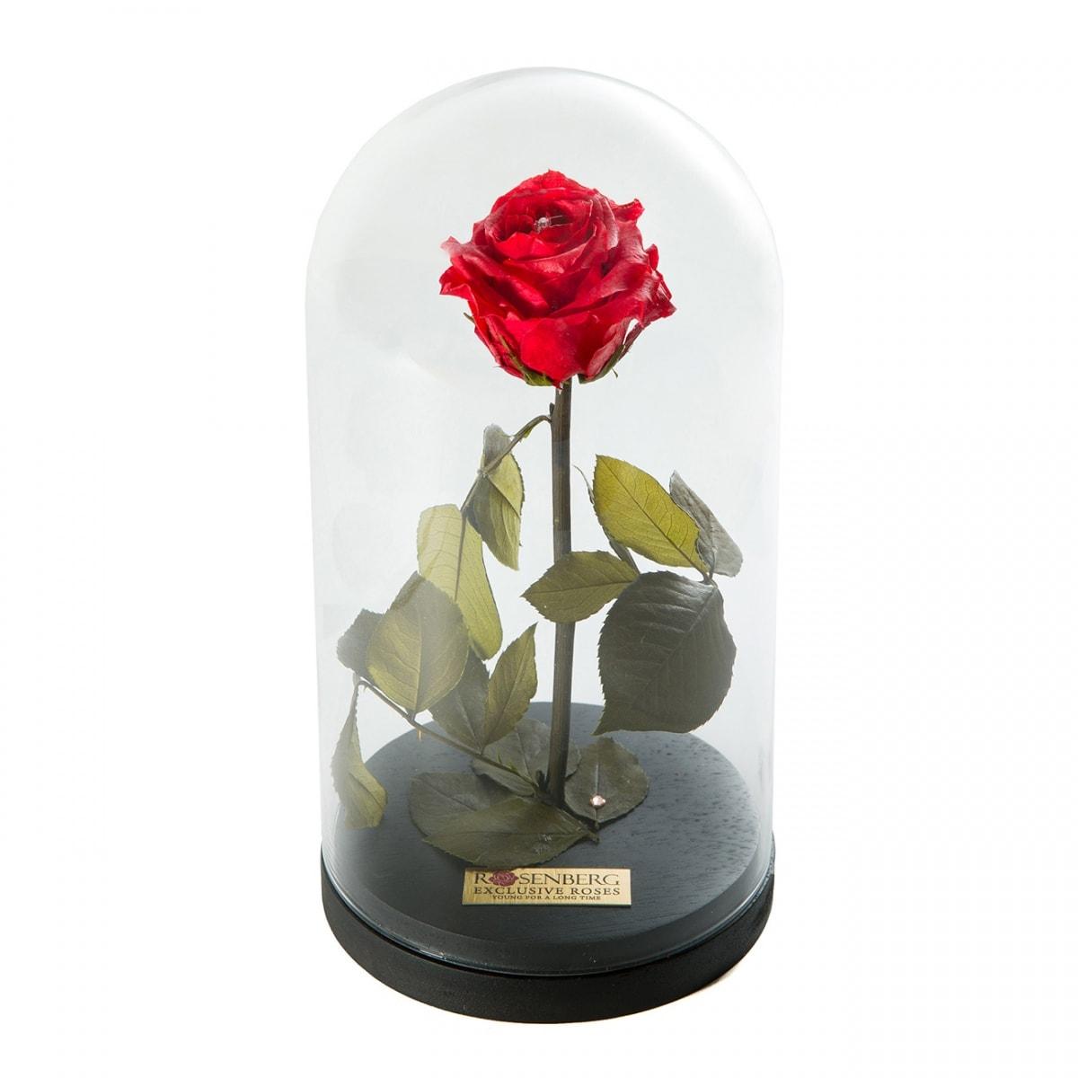 punane-roos-klaaskuplis-musta-alusega