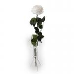 üksik roos king size valge