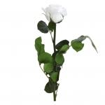 väike roos valge
